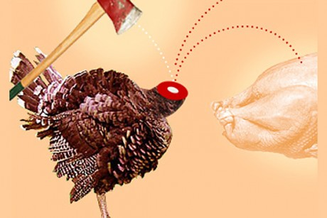 a image of a turkey. Diary of a turkey killer. Topics:Stories About Thanksgiving, Thanksgiving,