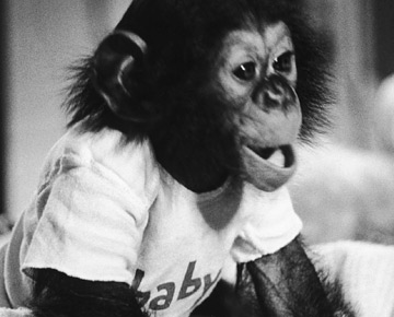 The chimp who thought he was a boy