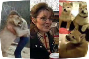 Nude! Puppies! The year in viral video. Topics:2008 Elections, Sarah Palin, ...