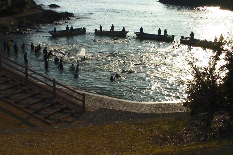 japanese fishing village of taiji quan