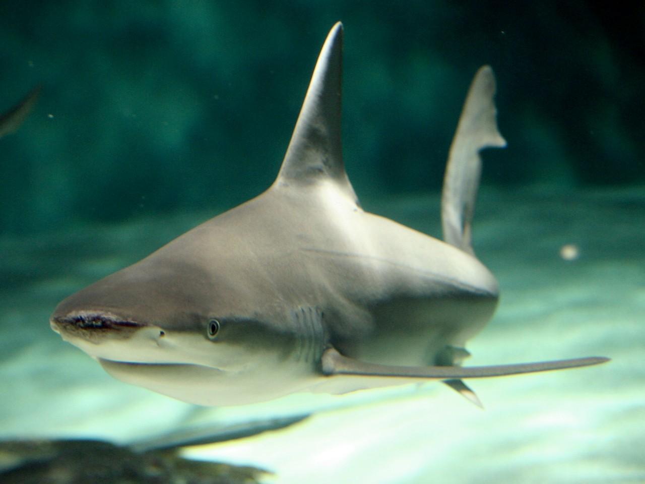 China bans shark fin soup at official dinners - Salon.com