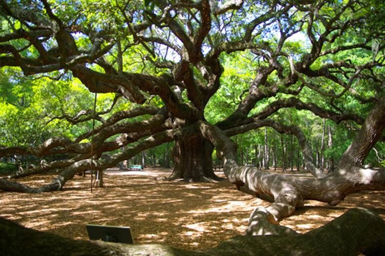 The strange and wonderful world of ancient trees - Salon.com