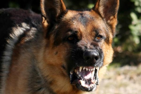 Dog Training Techniques Barking