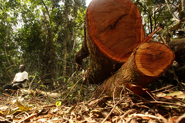 Forests in danger as study warns UN funding is unlikely