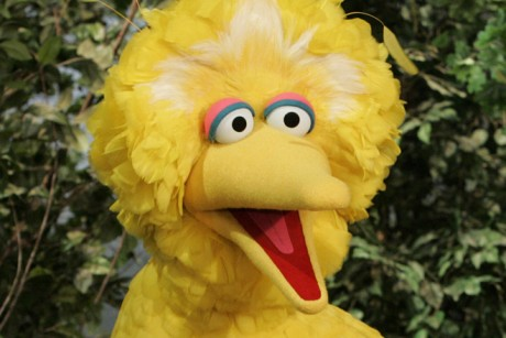 surprised big bird