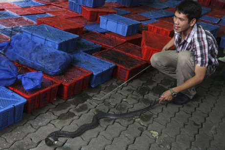 Thai authorities seize 600 smuggled deadly cobras