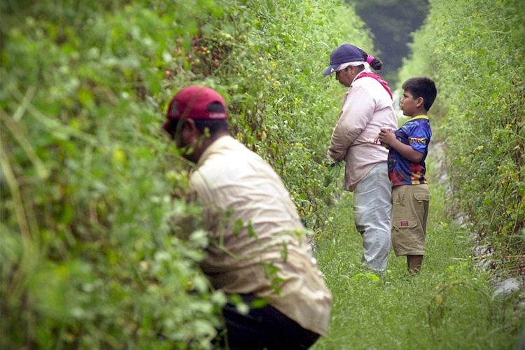 Migrant Worker Motherwhile