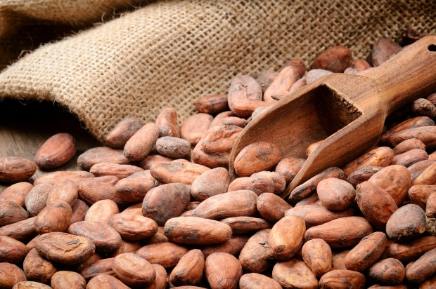 Cocoa could be the new brain drug