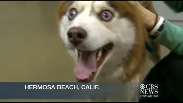 Blind Dog Has Seeing Eye Dog Cuteness Ensues Salon Com