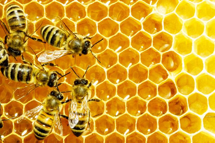 mehiläinen ajanvaraus forum prostituutio suomessa