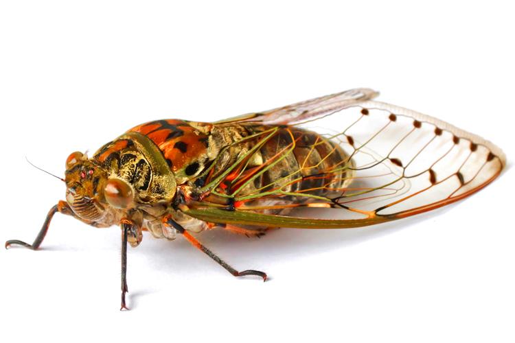 I M Terrified Of The Cicada Onslaught Salon Com