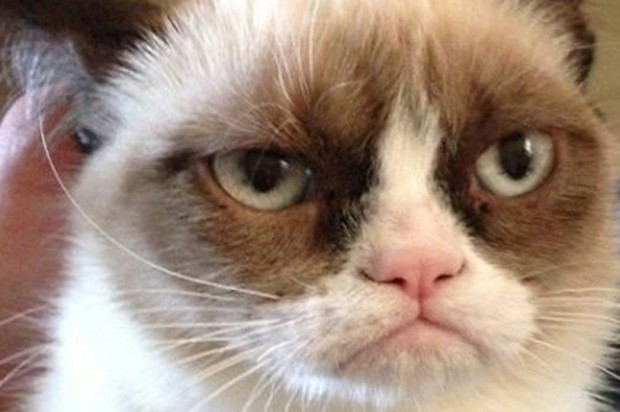 Grumpy Cat gets a movie deal