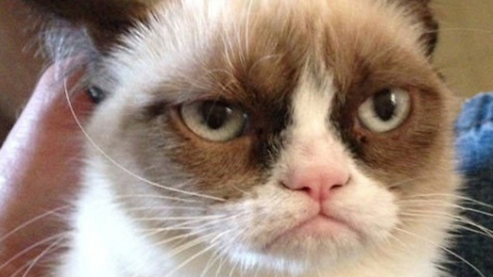 Grumpy Cat gets a movie deal - Salon.com