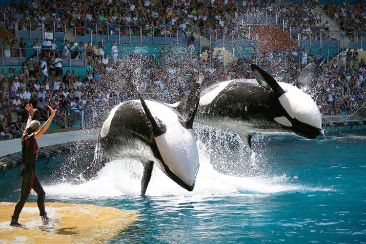 Skewed poll 99 percent of people s perceptions of seaworld unaffected