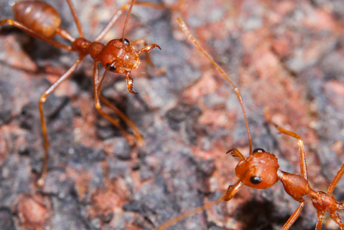 Ants from hell