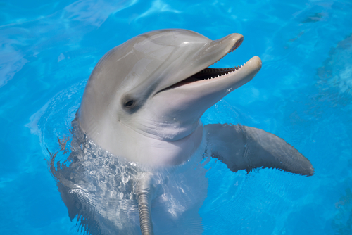 The navy is considering blowing up dolphins for Is a dolphin a fish