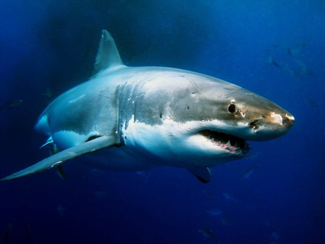 not everything s a shark attack com scientists ask the media to choose their words more carefully in order to minimize exaggerated public fear