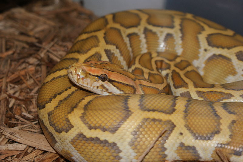 850 Snakes Found In Long Island Home
