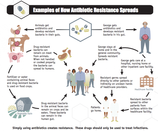 This flowchart explains where antibiotic resistance comes ...