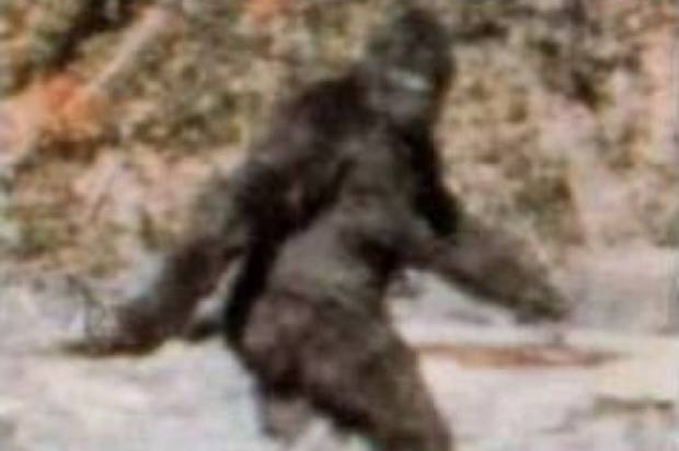 view download images  Images   Still no evidence of Bigfoot, but a new species may have been discovered -