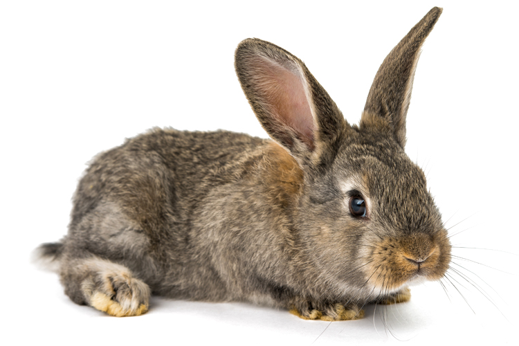 Is Dog Food Good For Rabbits