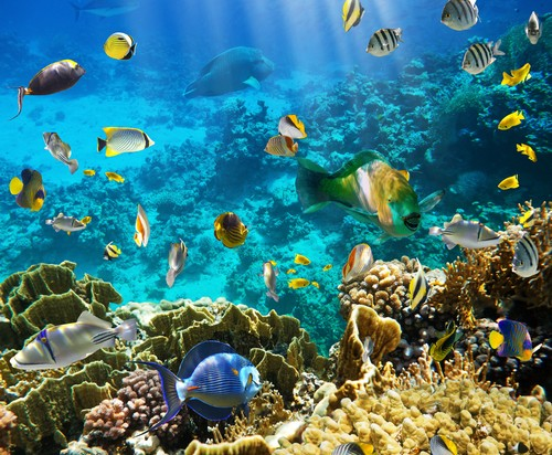 water biomes Aquatic biomes can occur in either salt water or freshwater about 98 percent of earth's water is salty, and only 2 percent is fresh the primary saltwater biome is the ocean major freshwater biomes include lakes and rivers aquatic zones.