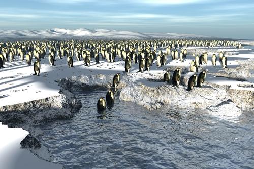 Study Penguins Scale 100 Ft Ice Cliffs To Escape The