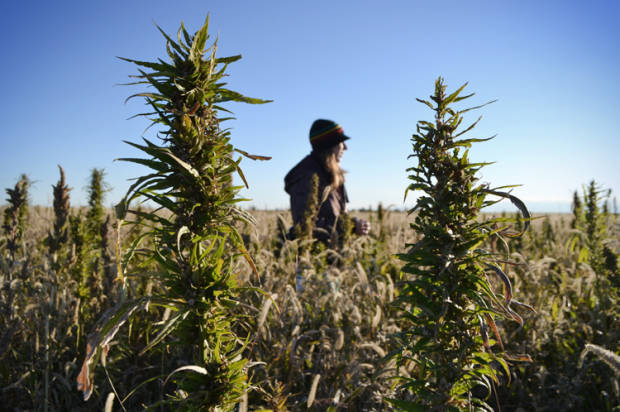 Why America's fired up about hemp