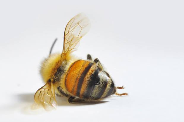 How to save the world's bees before it's too late