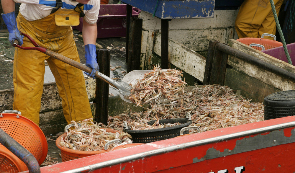 Wal-Mart and Costco are selling shrimp linked to slavery