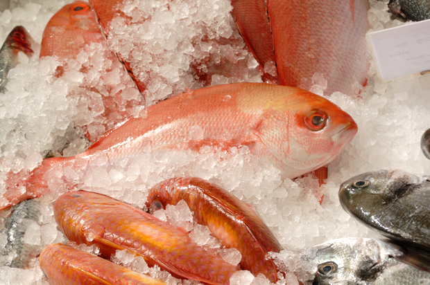 America s seafood nightmare why the usa needs to rethink for American fish and seafood