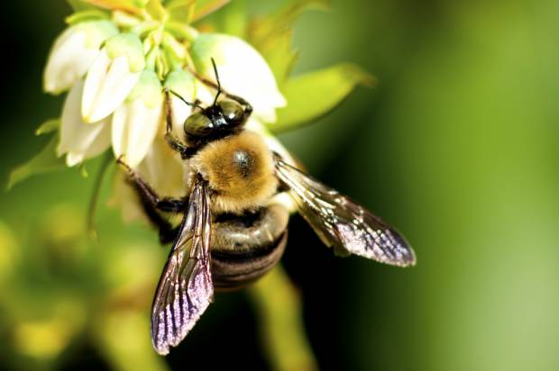 Report: Research into bee-killing pesticides is tainted by corporate interests