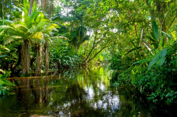 """Documents blow a major hole in Ecuador's """"attempt"""" to protect the Amazon"""