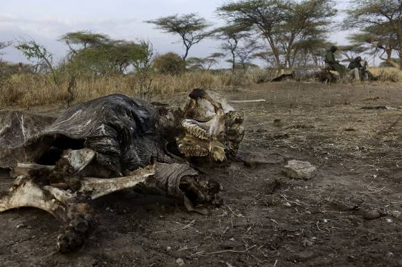 Africa's Poaching Epedmic.