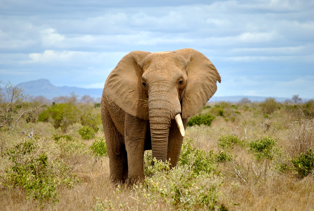 Elephant hunter method forex