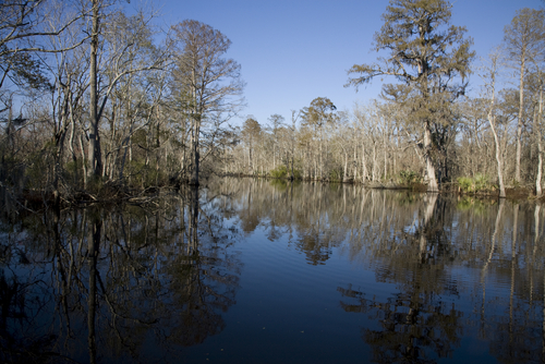 Is Louisiana's coastline beyond saving?
