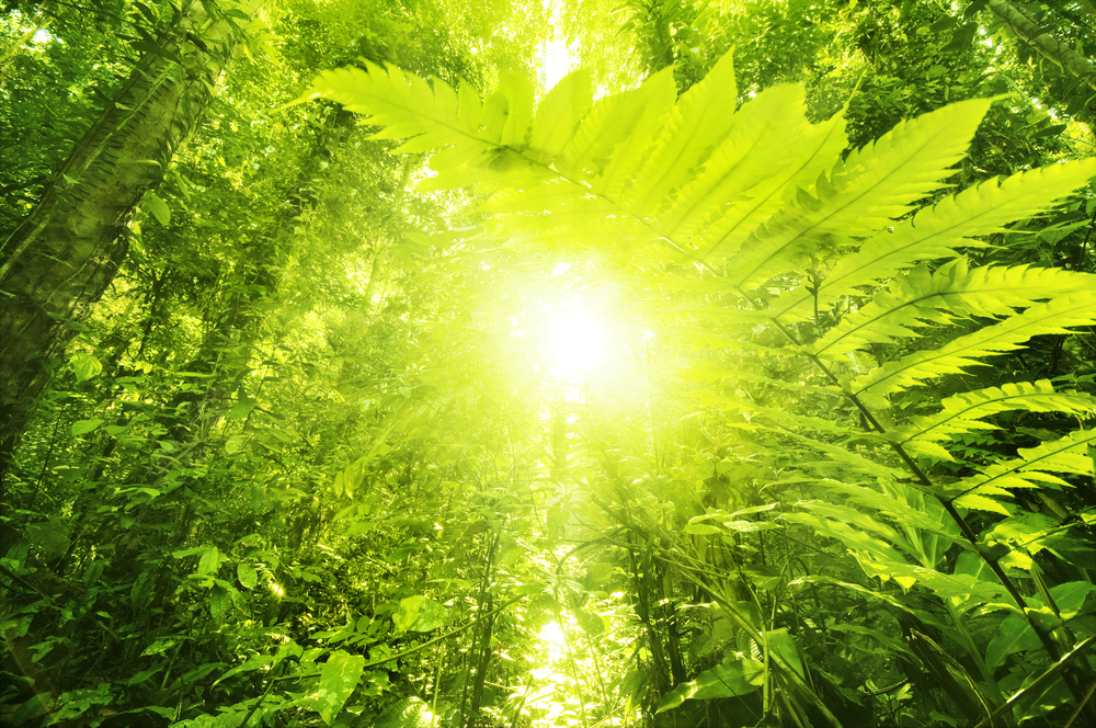 We Think Can Do Better Than Plants New Bionic Leaf Makes Fuel From Sunlight