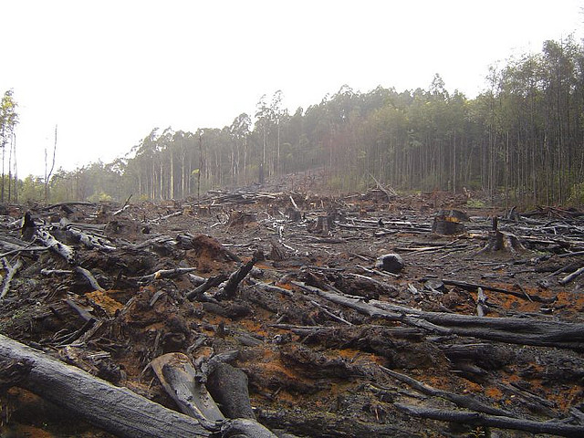 an analysis of the depletion and destruction of tropical rainforests in the world The tropical rainforests of the world, free study guides and book notes including comprehensive chapter analysis the destruction of the tropical rainforests.