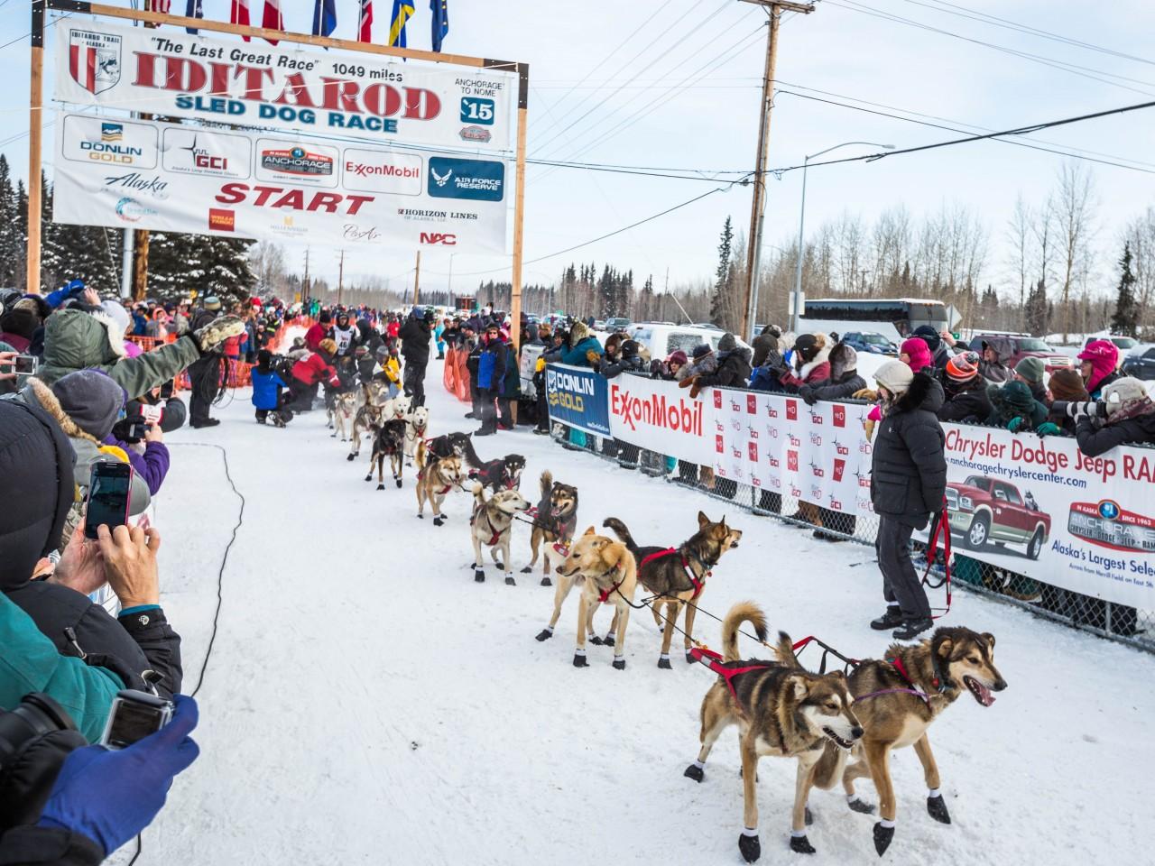 Pin Dog-sled-race on Pinterest