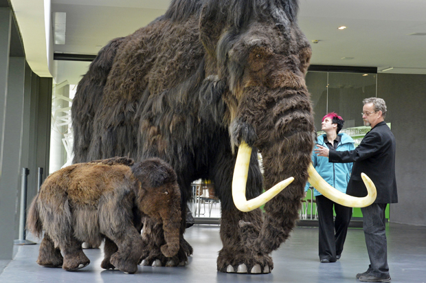 Image of: Glad The Megafauna Massacre Humans Responsible For The Extinction Of Ancient Species Saloncom Saloncom The Megafauna Massacre Humans Responsible For The Extinction Of