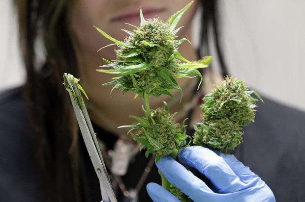 The real reason marijuana is illegal in the United States