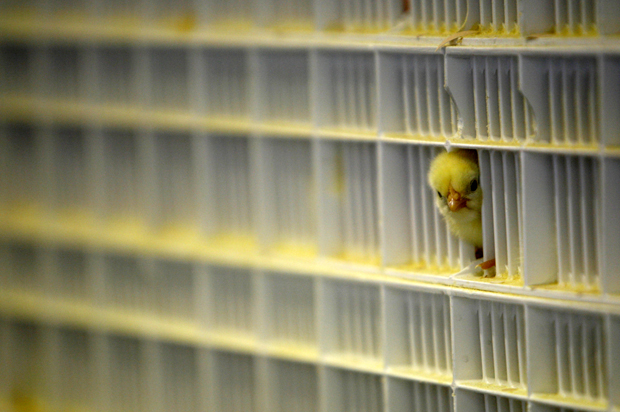 Factory farming is killing the planet why the meat for 3 little birds salon