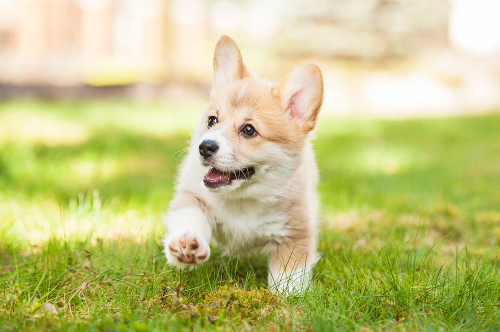 Types Of Dog Food For Puppies