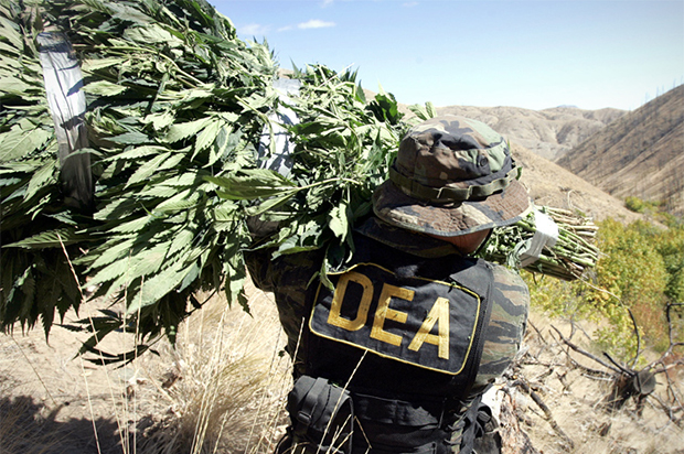 We need to abolish the DEA: There's no federal agency that does more harm to