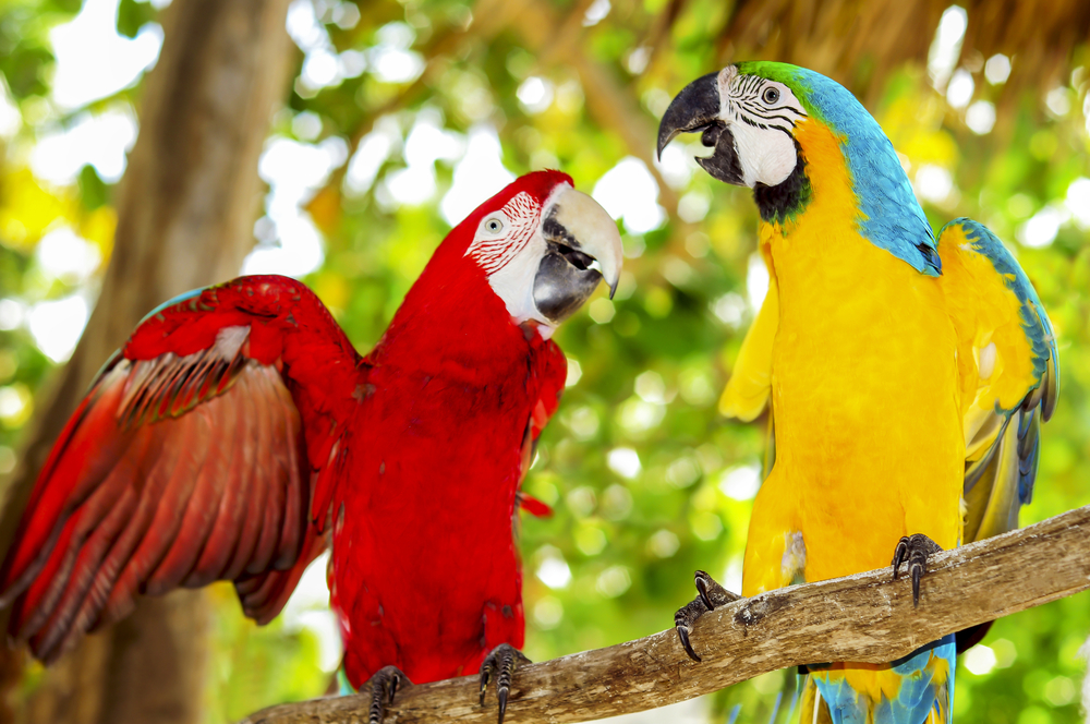 Birds are going extinct: Entire species are hanging on by their ...