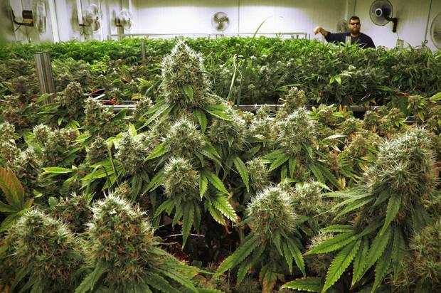 The 8 most popular jobs in the marijuana industry