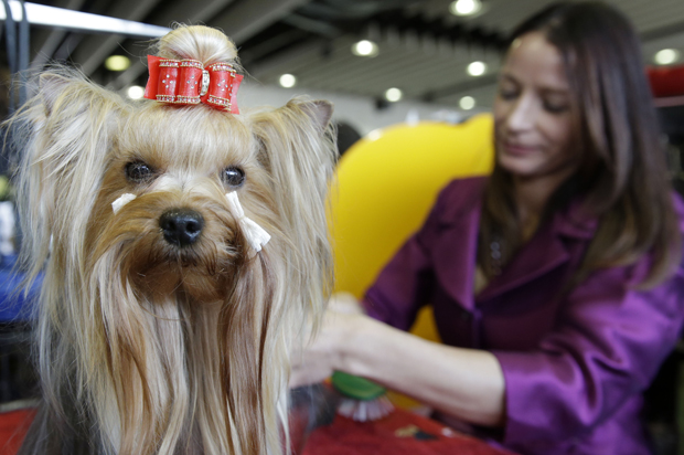 Kennel Club Dog Photo Competition