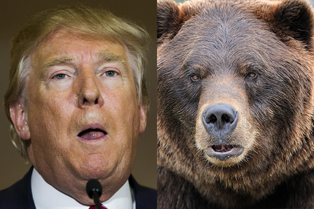 Under cover of COVID-19, Trump Interior Department to greenlight killing of bear cubs
