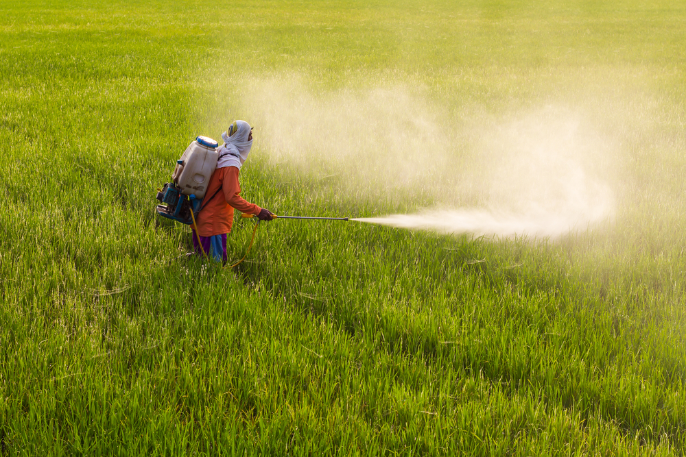 the use of fertilisers and pesticides in Fertilizers and pesticides due to this huge increase in population , urban techniques and machinery and globalization , the need for food has increased at an unprecedented scale  earlier , people used to use methods like slash and burn and rotation of crops to replenish the nutrients in the.