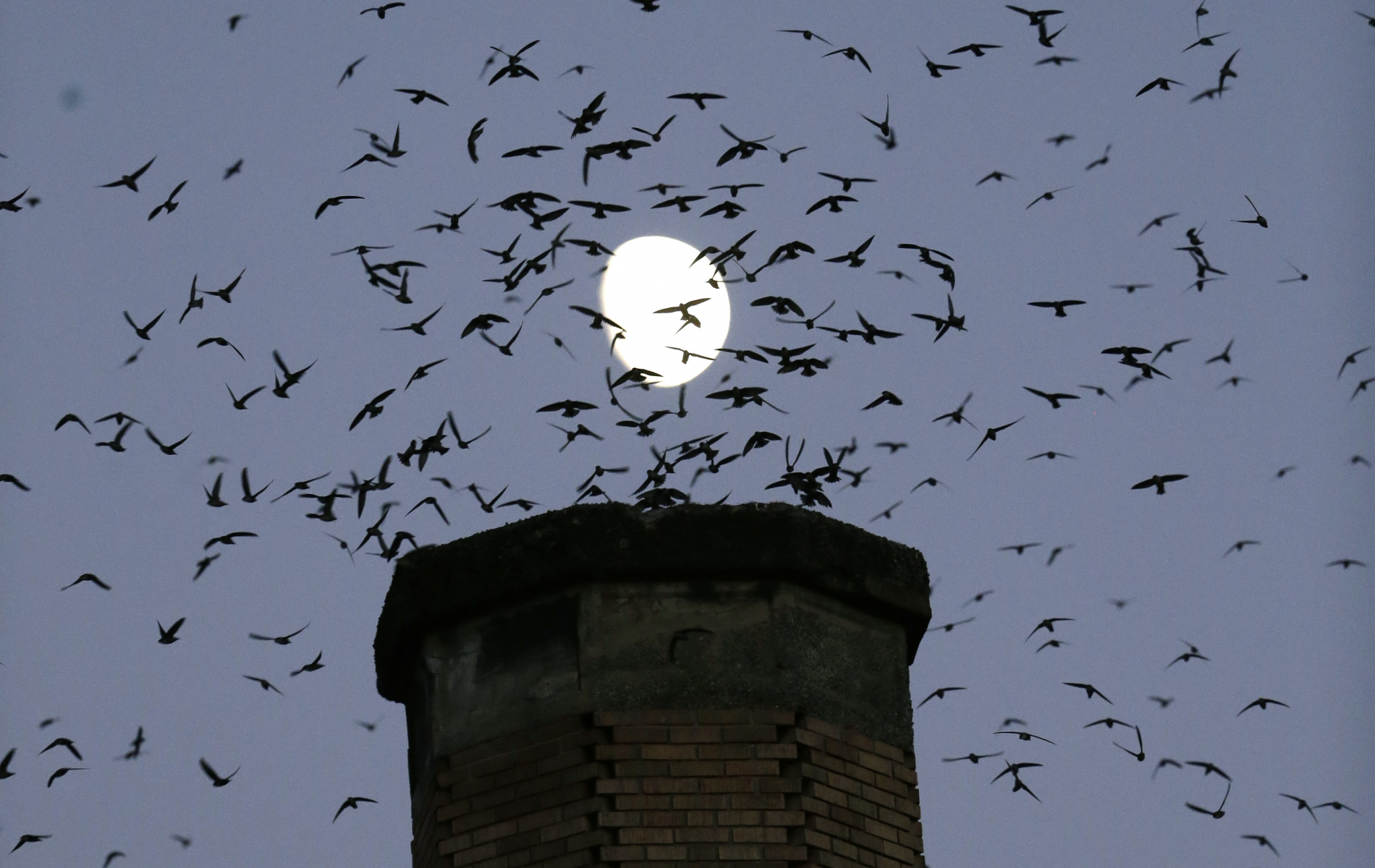 how weather radar can predict bird migration